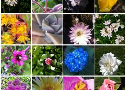 collage fotografico fiori